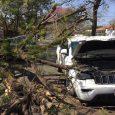 Manejaba tranquilo, hasta que un árbol aplastó su camioneta