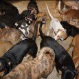 Juntó casi 100 perros sin hogar en su casa